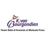 Van Bourgondien Dutch Bulbs