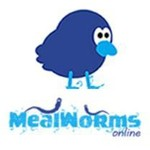 Mealworms-Online