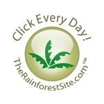 The Rainforest Site